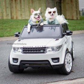 Sebastian loves luna | dogs pre wedding shoot | engagement shoot with pet | picnic pre wedding shoot | dogs kissing | pre wedding shoot with a ring | proposal shoot | dog in a car