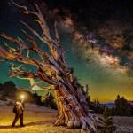 Bristlecone Forest California