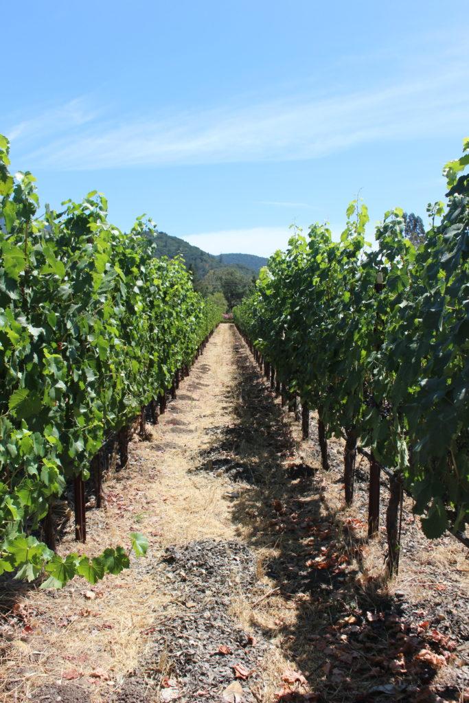 Landmark Vineyards, California I wit & whimsy