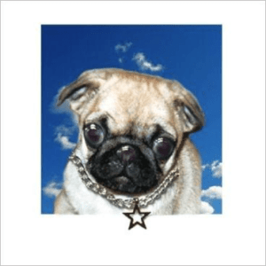 Pug Posh Pawz Greeting Card