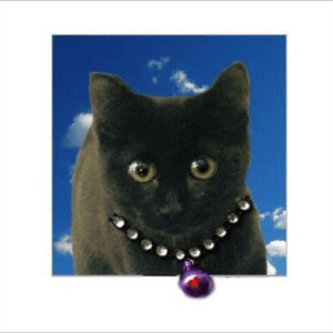 Black Cat Kitten Posh Pawz Greeting Card