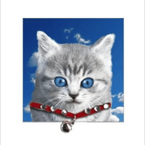 Silver Tabby Cat Kitten Posh Pawz Greeting Card