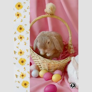 AR Easter Rabbits, Basket and Chick Greeting Card