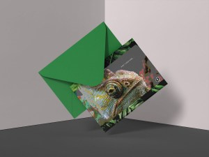 Chameleon Don't Look Now Greeting Card AR