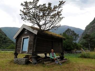 chatka z drzewkiem w środku