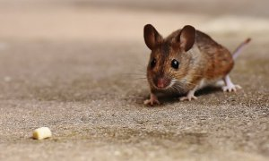 mouse-1708374__340