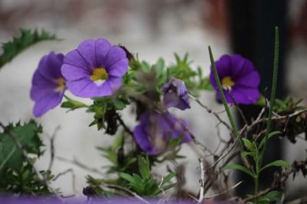 bloemen22