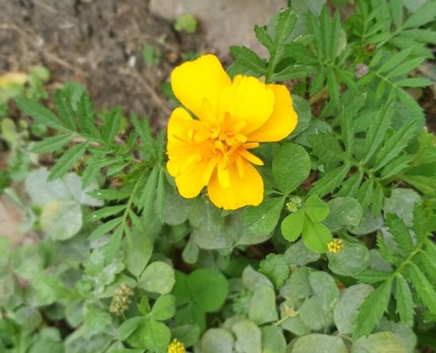 bloemen25