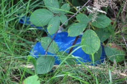 Een blauwe
