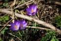 Vroege lente