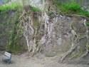Touwtjespringen onder de bomen