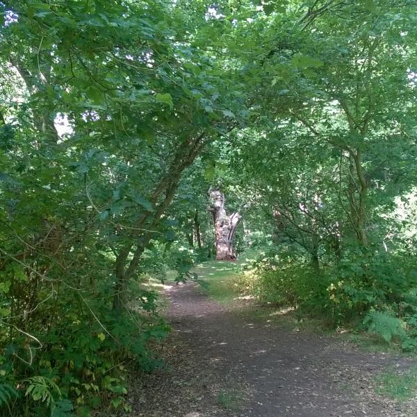 sherwoodforest07