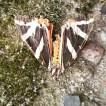 vlinder06