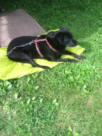 How To Make A Dog Bed Without Sewing