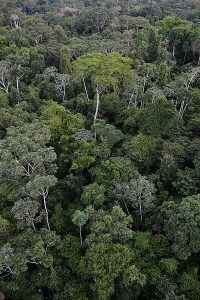 Save Amazon Rainforest Canopy, Animals and Plants