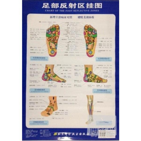 足部發射區掛圖︰新增主治病癥對照(附.刮痧板)