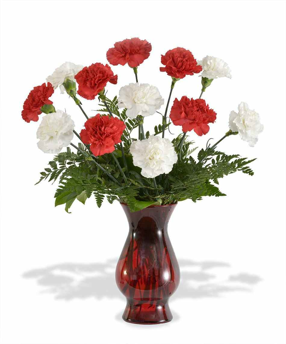 about red and white carnations from Walter Knoll Florist