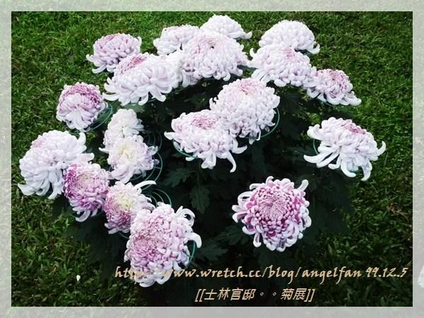 [玩♡台北-士林官邸 花之饗宴~菊宴。台北城] @小環妞 幸福足跡