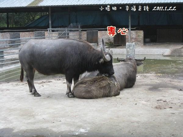 [瘋體驗2~玩♡苗栗-要跟動物當好朋友喔~台灣水牛城(早餐+環境篇)] @小環妞 幸福足跡