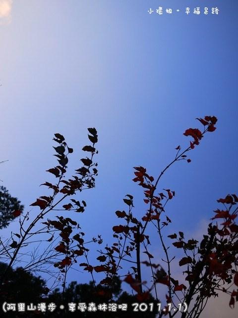 [玩♡嘉義-漫步阿里山。享受森林浴吧!阿里山森林遊樂區(神木區)] @小環妞 幸福足跡