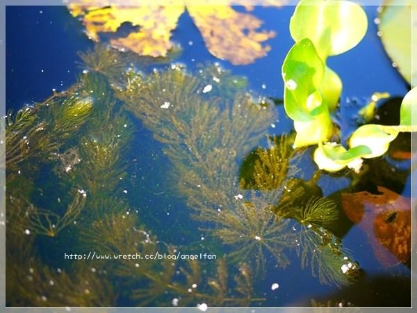 [宜蘭親子景點] 勝洋水草休閒農場~回味一下PS男的浪漫場景 @小環妞 幸福足跡