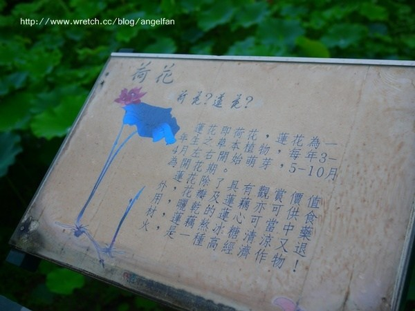 [南投中興新村賞荷] 驚喜!一夜大雨後賞荷去! @小環妞 幸福足跡