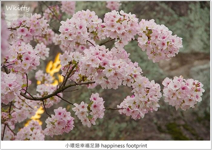 2015天元宮櫻花,櫻花熱烈開放中,要賞櫻加快腳步(3/15花況) @小環妞 幸福足跡