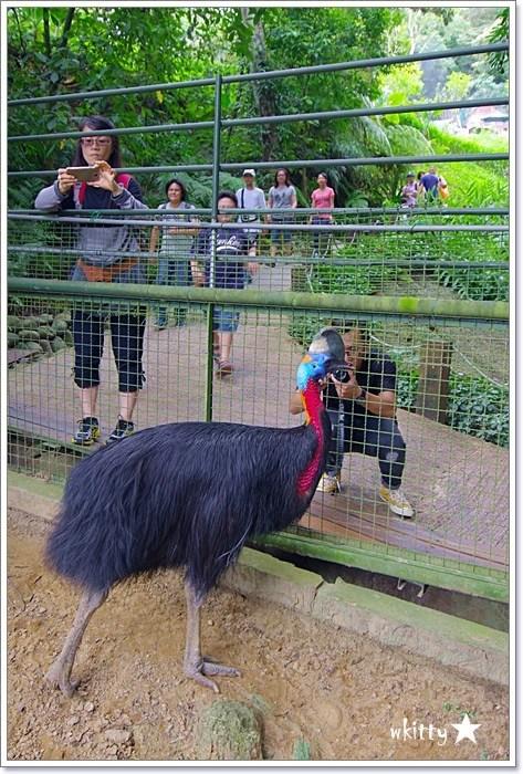 【新竹旅遊景點】森林鳥花園,小朋友們的森林快樂天堂,適合親子一日遊! @小環妞 幸福足跡