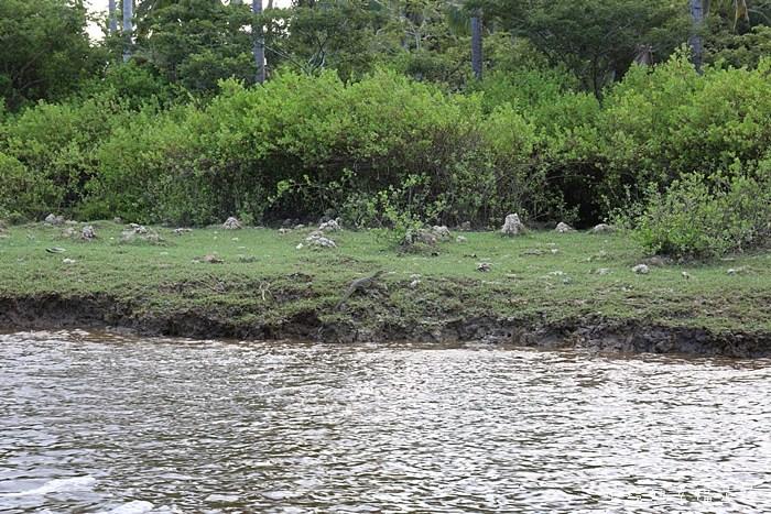 【沙巴景點】探訪長鼻猴和螢火蟲之旅,Kawa紅樹林夢幻螢火蟲,此生必看【13】 @小環妞 幸福足跡