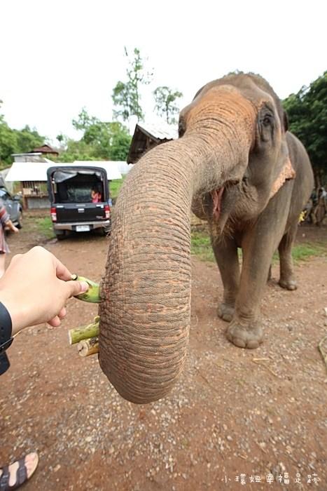 【泰國清邁大象半日遊】友善大象體驗營,餵食大象,跟大象洗泥巴浴(8) @小環妞 幸福足跡