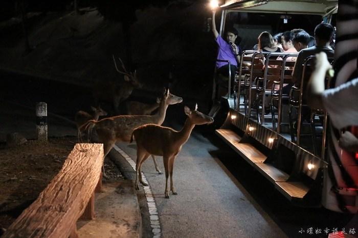 【清邁旅遊景點】夜間動物園Night Safari,近距離餵食動物,自助行程推薦必去(11) @小環妞 幸福足跡