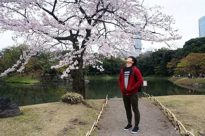 【東京賞櫻行程】小石川後樂園,東京櫻花開花時間較早的地點 @小環妞 幸福足跡