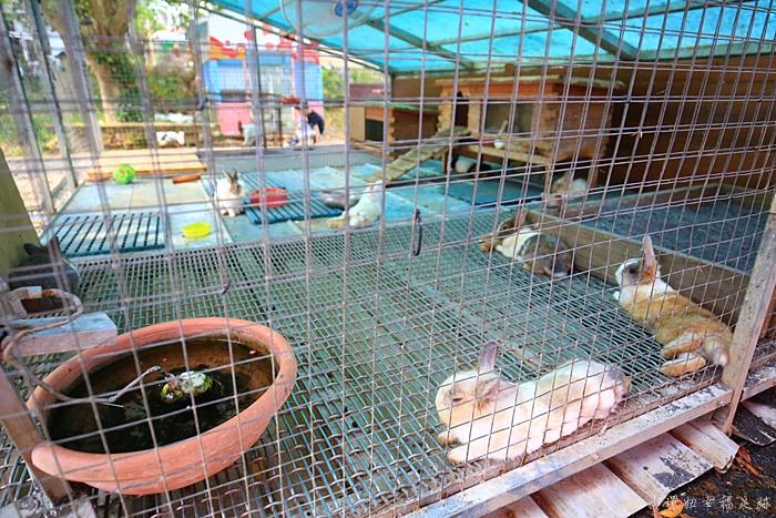 兔子迷宮,兔子迷宮天空步道,兔子迷宮景觀咖啡餐廳,兔子迷宮景觀餐廳,宜蘭兔子迷宮,宜蘭兔子迷宮咖啡園,宜蘭兔子餐廳,宜蘭天空步道,宜蘭彩虹玻璃天空步道 @小環妞 幸福足跡