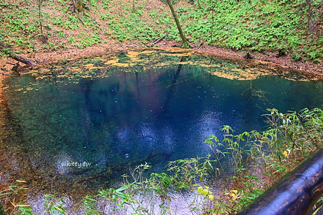 青森十二湖青池 日本東北五能線必訪景點 白神山夢幻藍寶石 小環妞