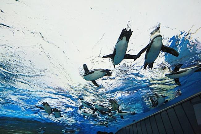 【東京池袋陽光水族館】Sunshine City屋上樓層,會飛的企鵝超療癒 @小環妞 幸福足跡