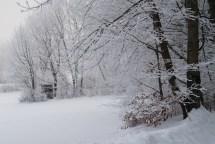 Winter_Jan11-12