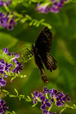 Butterfly World - Paarl