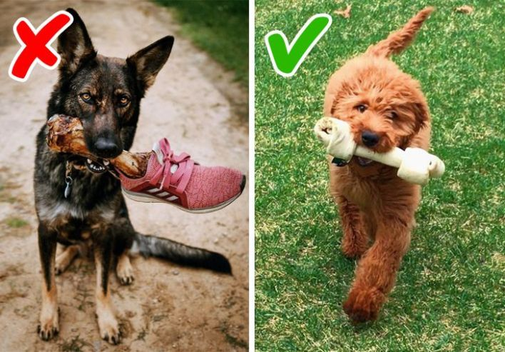 Dog chewing real bone vs. bone treats