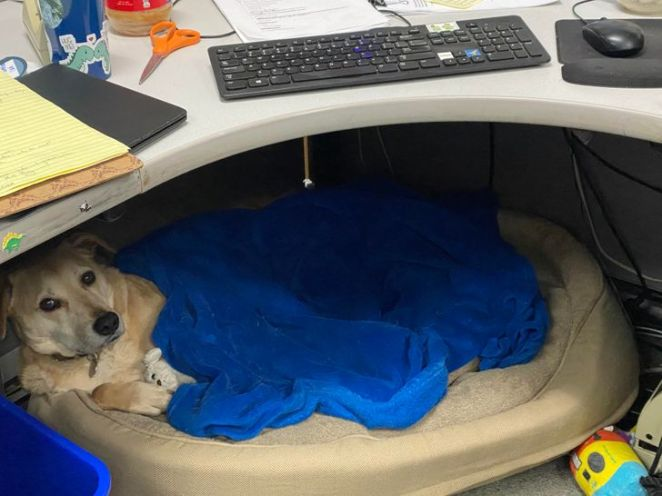 """20+ Tireless Dogs Who Could Become """"Employee of the Month"""""""