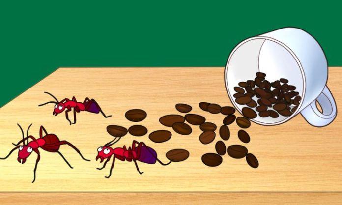 9 Ways to Use Coffee Grounds Around the House