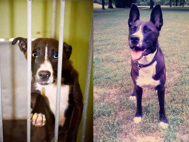15 Animals Before and After They Were Taken from a Shelter