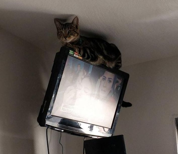 Gray tabby cat chilling on top of hanging television