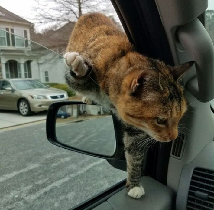 Cat sneaking into owner's car