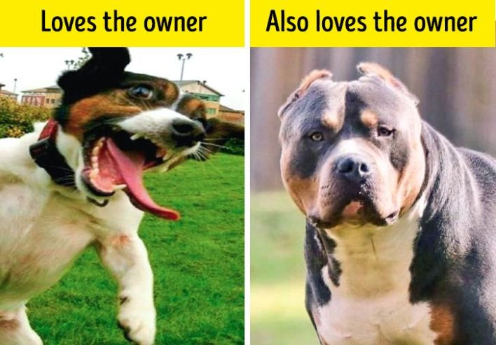 Two dogs showing different ways of loving