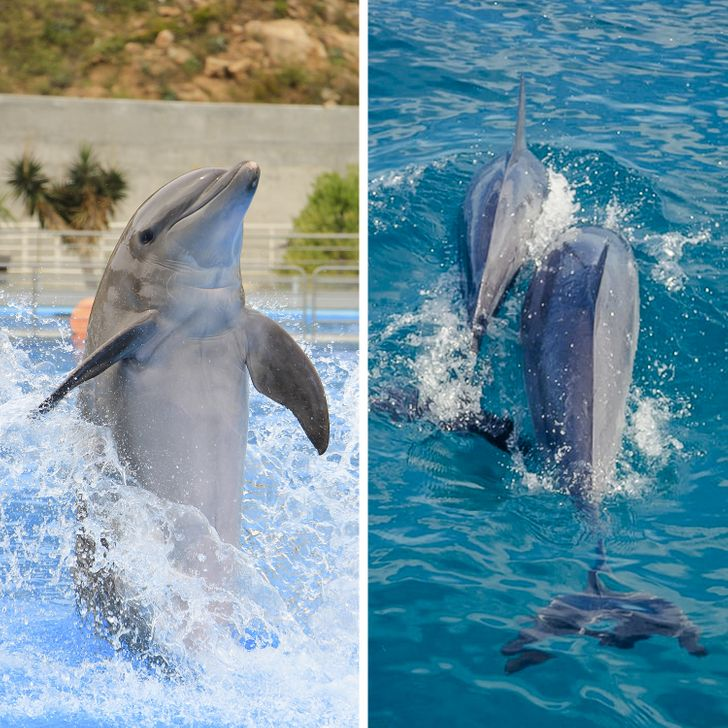 12 Facts About Dolphins That Made Us See Their Intelligence From Another Perspective (And We Can Only Love Them Even More)