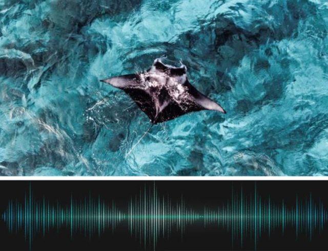 Conoce los asombrosos secretos que los océanos guardan en sus profundidades