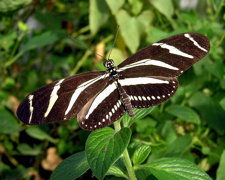 15+ Mariposas que nos dejaron sin aliento con su encantadora belleza