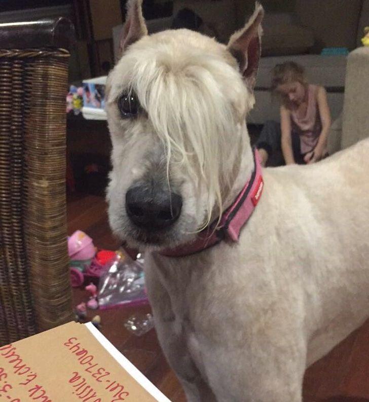 15 Cortes de pelo que casi convirtieron a las mascotas en humanos