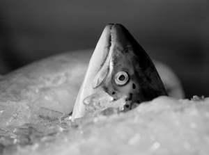 Jak kupić dobrą rybę na święta