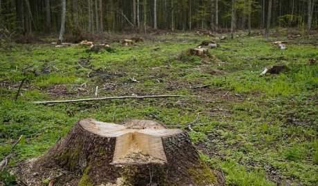 Trybunał Sprawiedliwości Unii Europejskiej orzekł, że zwiększona wycinka Puszczy Białowieskiej naruszyła unijne prawo